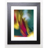 Affiche AYRAULT MARC Image encadree Rudbeckia - 37x47 cm - Multicolore - Generique