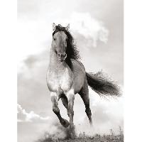 Affiche Affiche papier - Criniere au vent - Braun Studio - 60x80 cm - MID