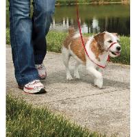 Attache - Sellerie EASY WALK Licol S - Rouge - Pour chien