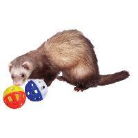 Balle - Frisbee Balles en plastique avec grelot pour furet Marshall