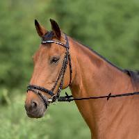 Bride - Bridon - Muserolle - Cavecon Bridon cuir V pour poney - Noir