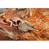 Decoration Artificielle - Resine - Led - Fond De Decor EXO-TERRA Décor crane vâche - Pour reptile ou amphibien - Exo Terra