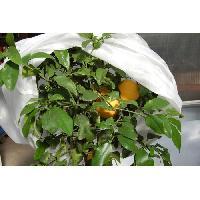 Jardinage JANY FRANCE Voile d'hivernage - PP non tisse 22g-m2 - 2x5m Aucune