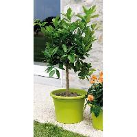 Jardiniere - Pot De Fleur - Cache-pot DEROMA Pot de fleur rond Farnese - O 35 x H 24.6 cm - 14 L - Vert anis