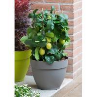 Jardiniere - Pot De Fleur - Cache-pot DEROMA Pot de fleur rond Ninfea a reserve d'eau - O 22 x H 17 cm - 4.4 L - Taupe