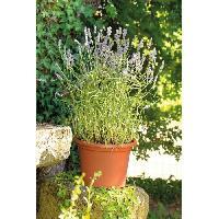 Jardiniere - Pot De Fleur - Cache-pot FDEROMA Pot Farnese - 30x30x21.2 cm - 8.9L - Terre rouge