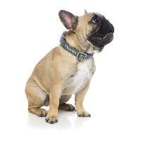 Laisse - Sangle - Accouple FUZZYARD Laisse néoprene Coachella L - 140 x 2.5cm - Pour chien