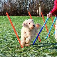 Materiel D'entrainement - Agility Dog Activity Slalom Agility jeu chien Trixie