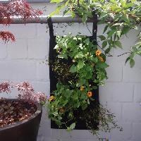 Mur Vegetal - Pot Pour Mur Vegetal - Kit Mur Vegetal Mur vegetal en tissu feutre -incl. attaches balcon- - noir. H60 x 30 cm