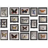 Objet De Decoration Murale Sticker deco Cadres papillons - Planche 48x68 cm