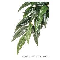 Plante D'aquarium - Vivarium - Terrarium - Decoration Vegetale - Substrat - Racine - Bois Plante Ruscus - Vert - Pour terrarium