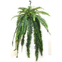 Plante Poussee Tres grosse Suspension de Fougere Verte - Hauteur 115 cm