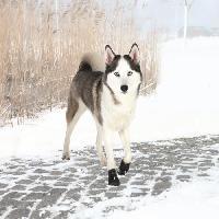Protection Des Pattes -guetres - Chaussures - Chaussettes TRIXIE Bottes de protection Walker Active 2 pieces M-L - Noir - Pour chien