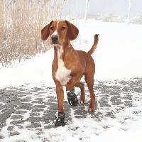 Protection Des Pattes -guetres - Chaussures - Chaussettes TRIXIE Bottes de protection Walker Active 2 pieces M- Noir - Pour chien