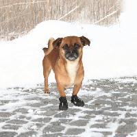 Protection Des Pattes -guetres - Chaussures - Chaussettes TRIXIE Bottes de protection Walker Active 2 pieces XS - Noir - Pour chien