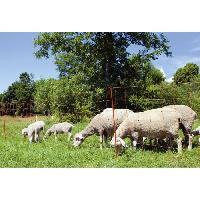 Securite - Protection Kerbl Filet pour moutons OviNet 90 cm 27251