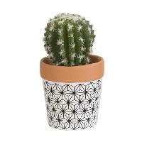 Vase - Coupe - Fleur Mini Cactus boule - En pot ethnique noir